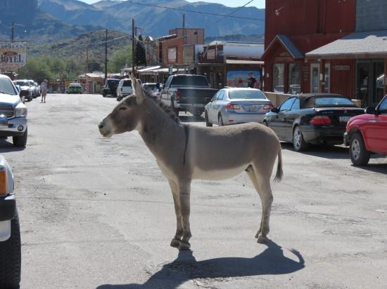 Donkey in Oatman, AZ