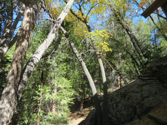 A backyard of boulders and trees