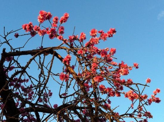Soule Park Blossoms