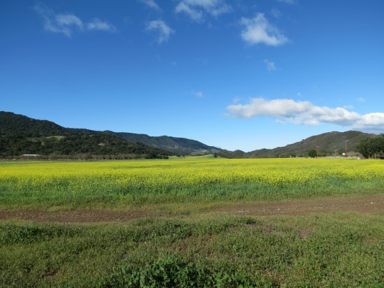 An Upper Ojai Meadow