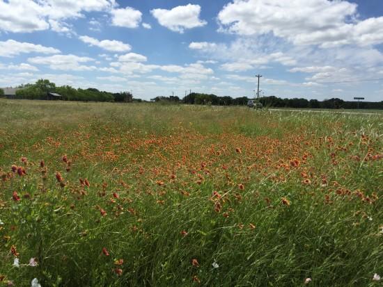Fredericksburg Flowers